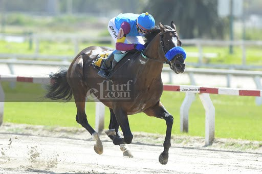 Gallo Emplumado (Hurricane Cat) se impuso en Condicional (1400m-Arena-PAL).