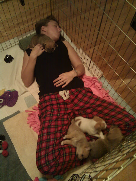 Photo: Susan and a pile of puppies