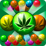 Weed Farm Bubble Shooter Match 3 Games 3.51