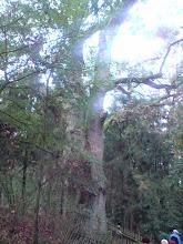 Photo: Pomnik przyrody nr 2