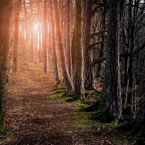 Fairytale Forest by Jens Klappenecker-Dircks - Landscapes Forests