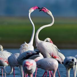 by Deven Dadbhawala - Animals Birds