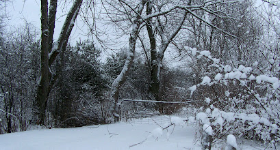 Photo: Snow covered gate.