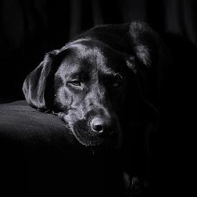by Arun Acharya - Animals - Dogs Portraits
