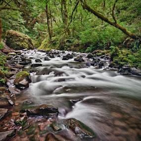 Bridal Veil Creek by Jun  Gomez - Nature Up Close Water