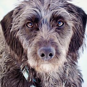 Billie by Elaine Tweedy - Animals - Dogs Portraits