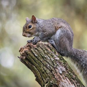 squirrel-14.jpg