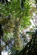 """Photo: Dialog-Seminar zum Thema """"Nachhaltiger Tourismus"""" im süden Nicaraguas mit jungen Leuten aus Costa Rica, Nicaragua und Deutschland. Im: Centro Ecologico Los Guatuzos."""