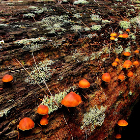 Mushrooms by Evah Banova - Nature Up Close Mushrooms & Fungi ( wood, tree, nature, moss, landscape, mushrooms, , save the forests worldwide, forests, Mushroom, closeup, quality, detail, new, fresh, win, 2013, 2014, color, colors, portrait, object, filter forge, mushroom, natural )