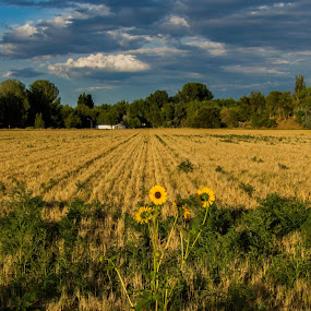by Sandeep Kochar - Landscapes Prairies, Meadows & Fields