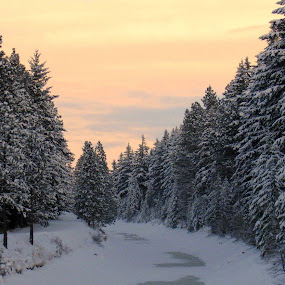 SNOW DAY by Cynthia Dodd - Novices Only Landscapes ( winter, sky, nature, cold, color, outdoors, snow, trees, canal )