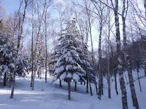 木々は冬の装い