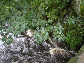 Photo: PW  - Colden River