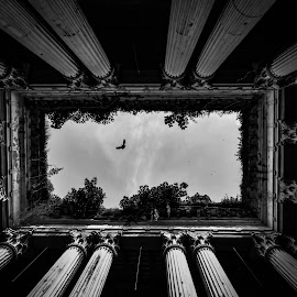 Give me Freedom by SURIT DATTA - Black & White Buildings & Architecture ( heritage_buildings, black and white, architecture )