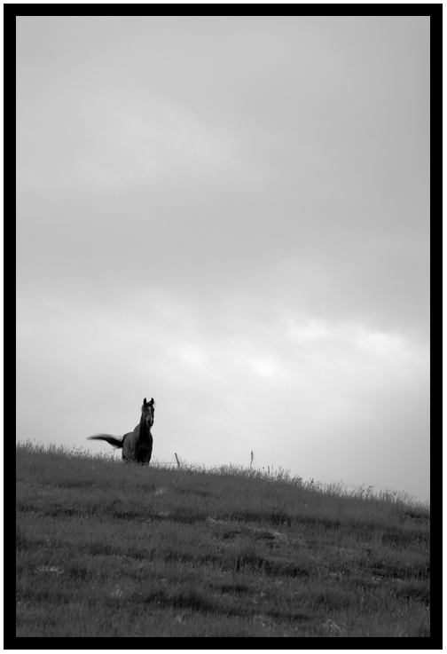 Cavallo sulla collina di Mato