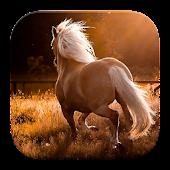 Wild Horses Theme Wallpapers