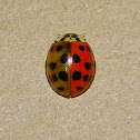Ladybug with anomaly