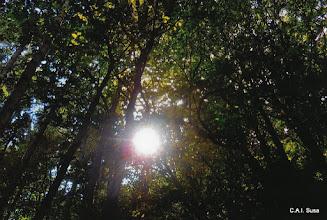 Photo: Carlo Bellone - Luce nel bosco - Pian delle rovine , Giaglione