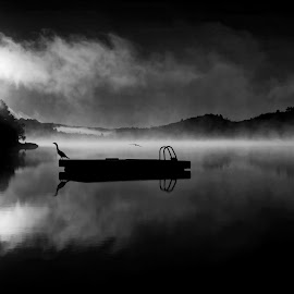 Trout Lake Morning Sunrise by Melissa Connors - Black & White Landscapes ( sunrise, canada, reflection, ontario, black and white, cormorant, trout lake, lake, summer, morning )