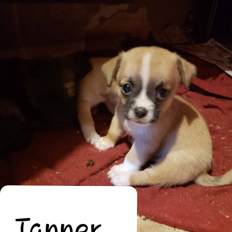 Mixed Blessings Puppies - Pet Adoption Service in Duncan