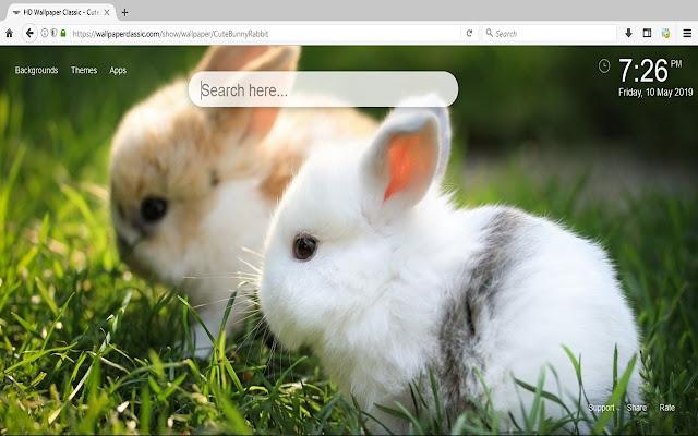Cute Bunny Rabbit Wallpaper HD