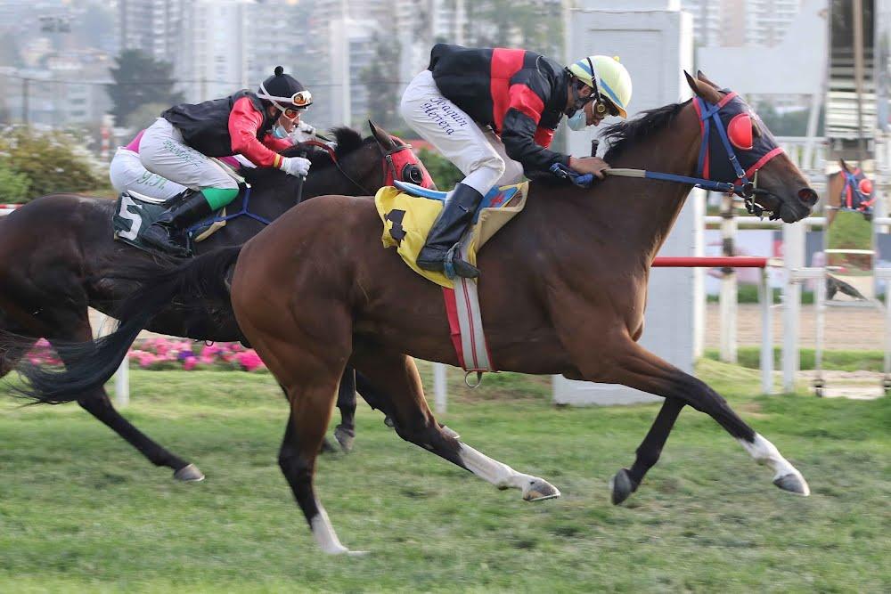 Brisnet (Holy Roman Emperor) gana Handicap (1000m-Pasto-VSC).