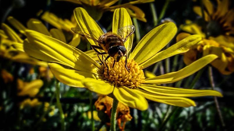 La vita è un fiore per il quale l'amare è il mielele di francesca_glosa_