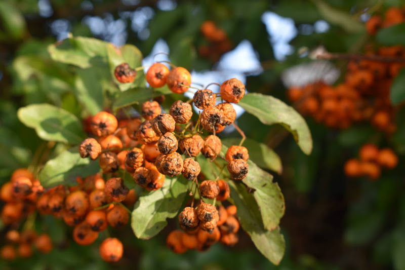 Verde e arancione di carm_ian_