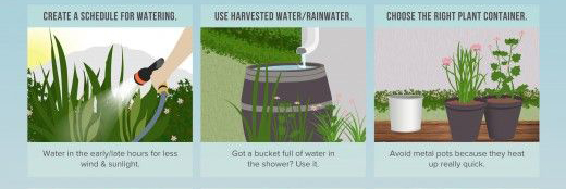 Save water in your garden by using a watering schedule