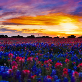 by Olivia Emery - Flowers Flowers in the Wild