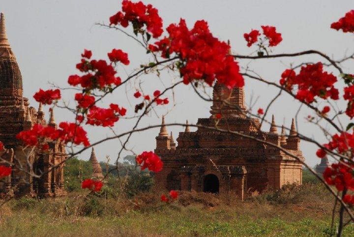 Fiori su Bagan di erica