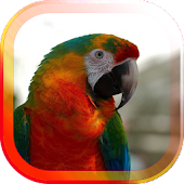Parrot Gallery live wallpaper