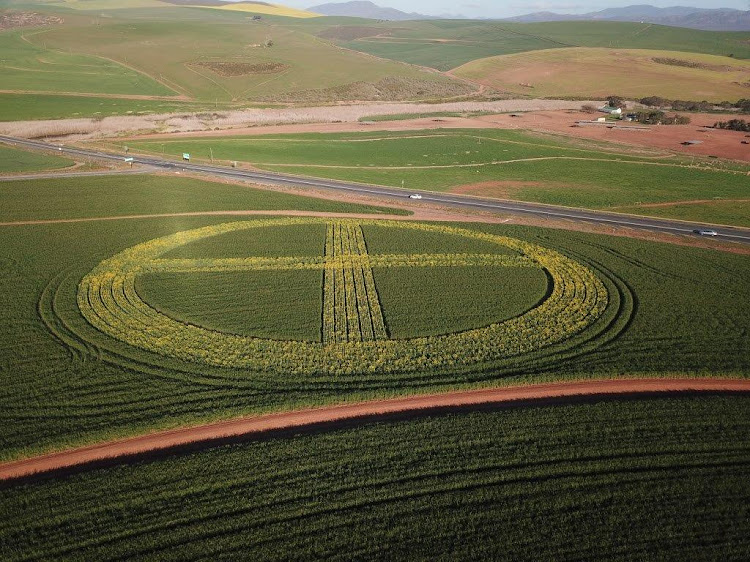 Crop circles 100m in diameter planted in wheatfields by the N2 in the Overberg to mark the centenary of agricultural studies at Stellenbosch University.