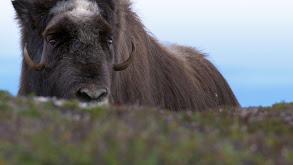 Fall on the Tundra thumbnail