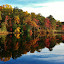 Beautiful Autumn Scene At Weinberg Park by Matthew Beziat - Landscapes Waterscapes ( reflection, autumn scenes, weinberg park, america, weinberg park pasadena, reflections, fall 2015, pasadena, autumn scenes 2015, fall, anne arundel county, maryland, fall scenes, pasadena maryland, pond,  )