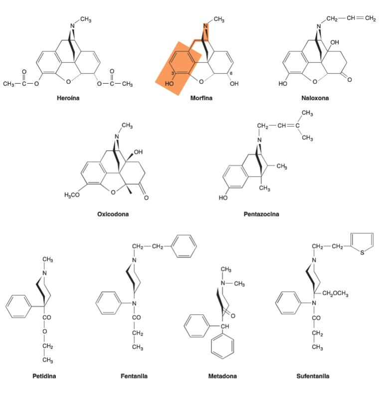 Estruturas químicas de alguns opióides. Range & Dale, 2016.