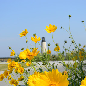 A Moment in Time by Jason Asselin - Nature Up Close Flowers - 2011-2013 ( nature, lighthouse, lake, yellow, flower )