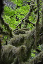 Photo: Mossy