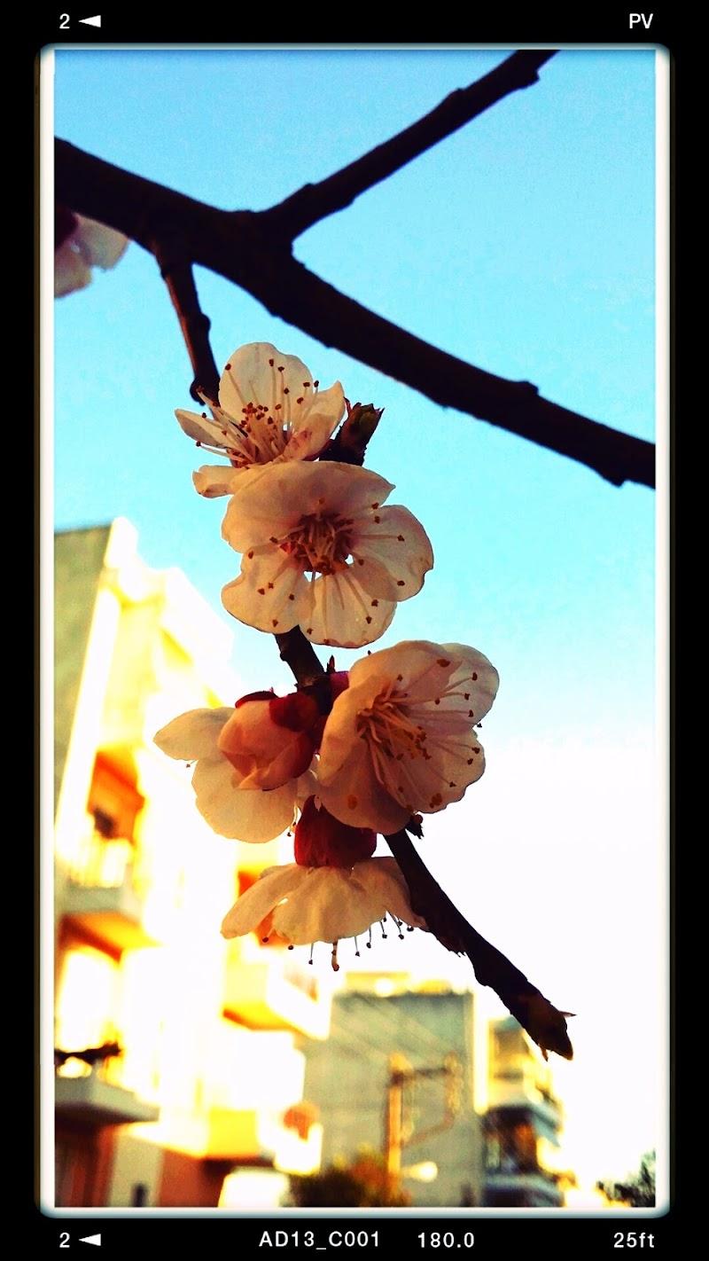 La primavera in città di Eleni Karadagli