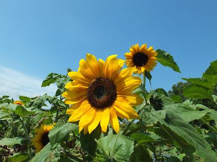 いのち輝く花とミツバチ