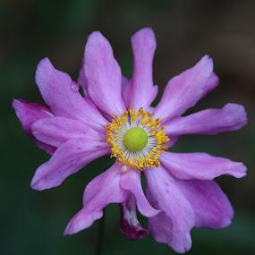 by Mellissa Flynn - Flowers Single Flower (  )