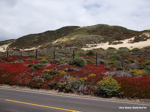 Photo: Brillian reds along sand dunes, Highway One, Big Sur