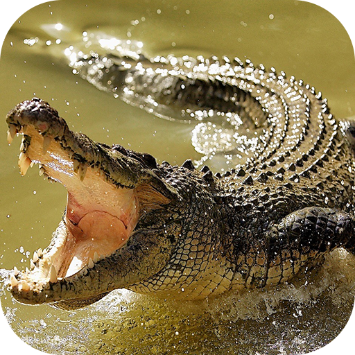Crocodile Wallpapers file APK for Gaming PC/PS3/PS4 Smart TV