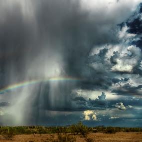 The Perfect Storm by Scott Wood - Landscapes Weather ( desert, monsoon, arizona, storm, rain, cactus,  )