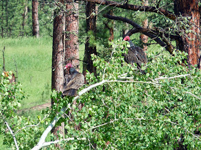 Photo: Vultures spotted on the side of the road! They were trying to dry off their wings