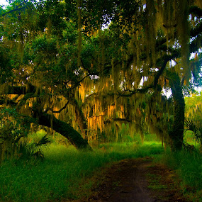 Swamp, Really by James Newberry - Landscapes Forests ( nature, grass, trail, outdoor, landscape, morning, oak tree )
