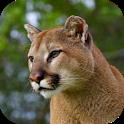 Cougar Sounds icon