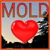 Mold in Flintshire FREE