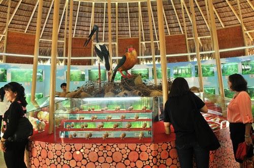 Vườn quốc gia Tràm Chim nhộn nhịp trong ngày hội du lịch - 3