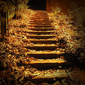 Golden Stairway by Tanya Rossi - Landscapes Travel ( stairs, stairway, autumn, steps, gold, leaves, golden )